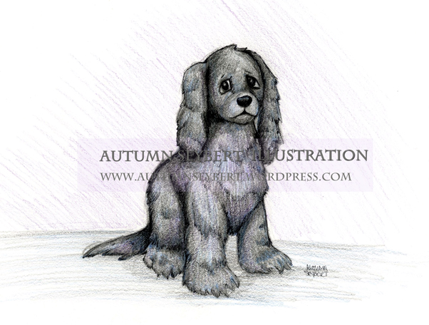 Casey-D.-Dog