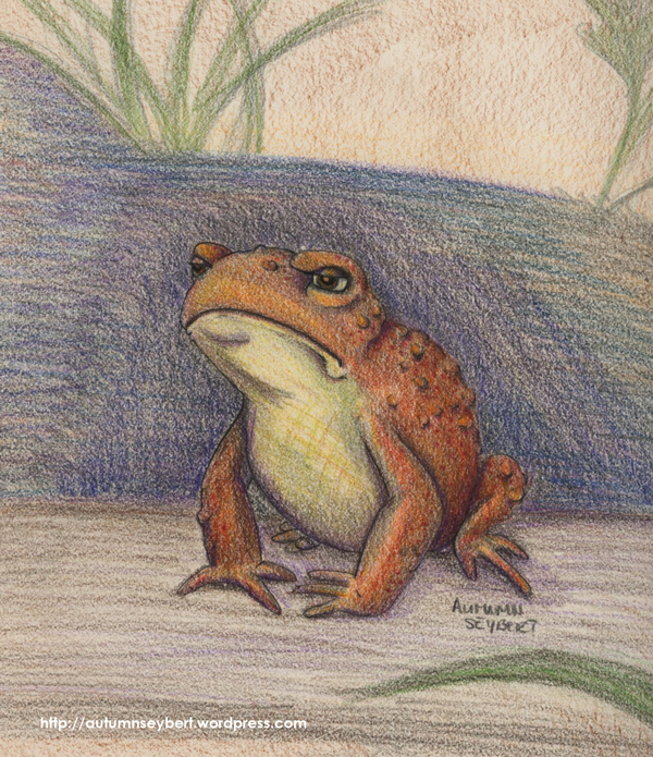 the-Grouchy-Toad