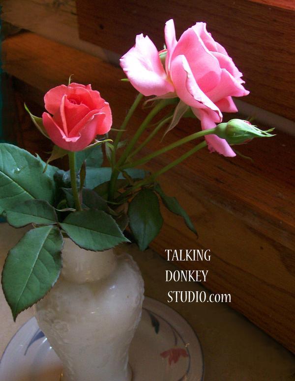 Nancys' Rose
