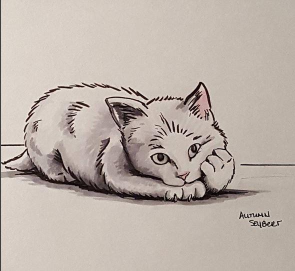tired kitten
